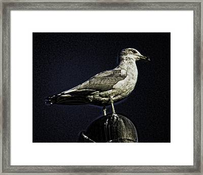 Gull At Sundown Framed Print by Joe Bledsoe