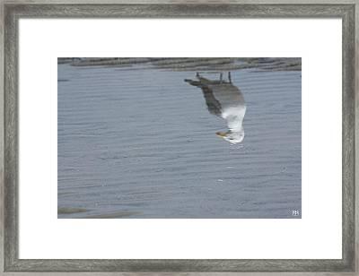 Gull At The Beach Framed Print