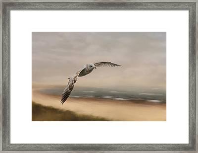 Gull At The Shore Framed Print by Jai Johnson