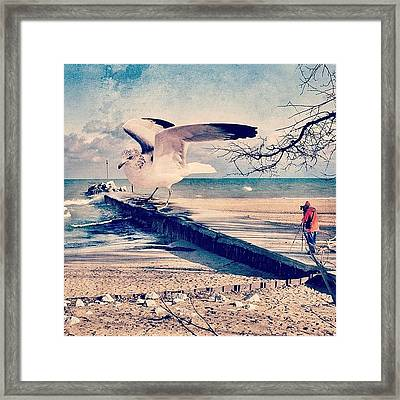 #gull #beautiful #bird #seagull #water Framed Print