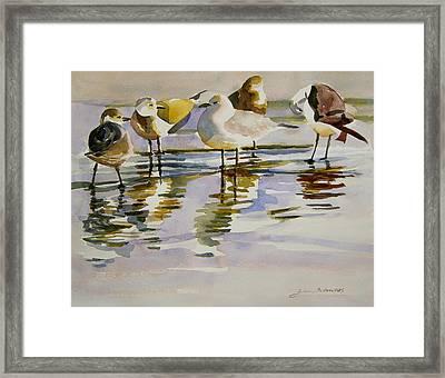 Gull Family Framed Print by Julianne Felton