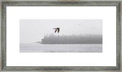 Gull In Flight Framed Print by Marty Saccone