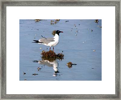 Framed Print featuring the photograph Gull In Seaweed by Linda Cox