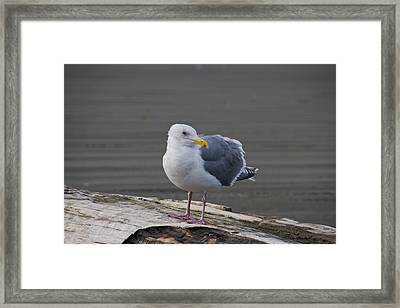 Framed Print featuring the photograph Gull On A Log by David Stine