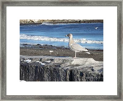 Framed Print featuring the photograph Seagull  by Eunice Miller