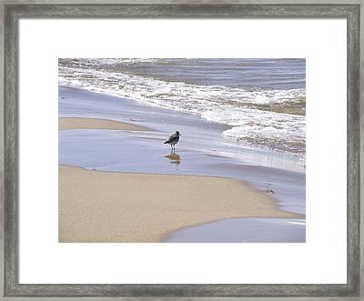 Gull On The Shore Framed Print by Richard Gregurich
