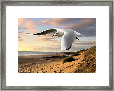 Gull On The Wing Over Beach Landscape Framed Print by Elaine Plesser