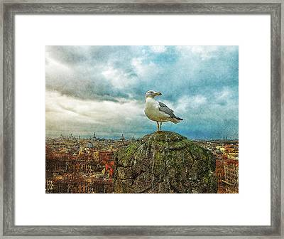 Gull Over Rome Framed Print by Jack Zulli
