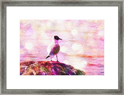 Gull Scouts From Stone Framed Print