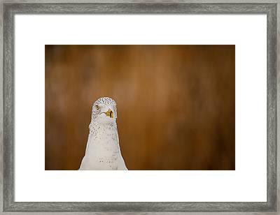 Gull Stare Framed Print