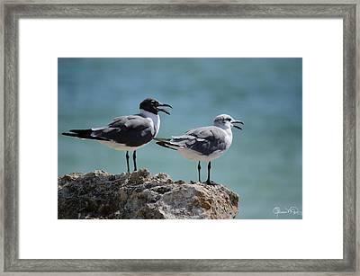 Gull Talk Framed Print