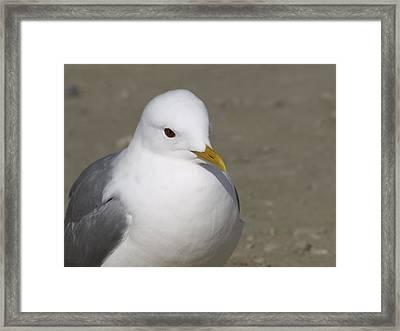 Gull Framed Print by Tara Lynn