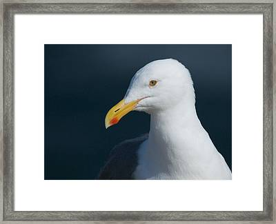 Gull Watcher Framed Print by Bob Smithing