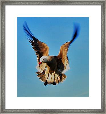 Gull Wing Framed Print by John King