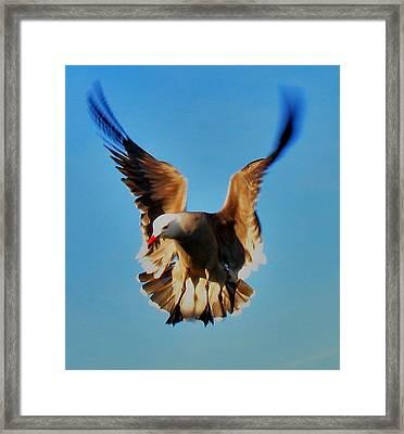 Gull Wing Framed Print