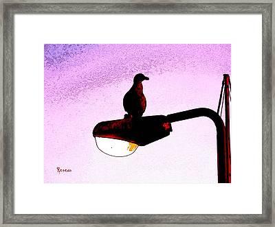 Gullable Sentry Framed Print by Sadie Reneau