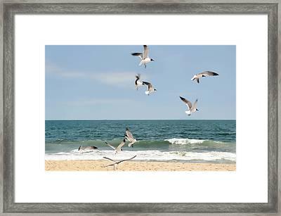 Gulls A Dance'n Framed Print