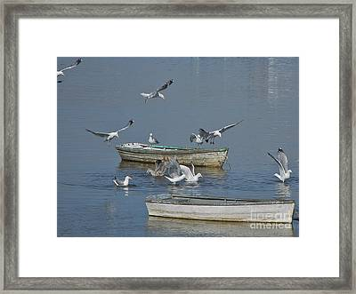 Gulls And Dories Framed Print by Christopher Mace