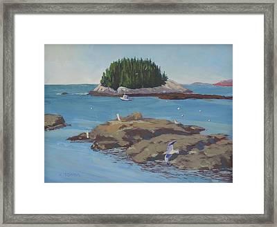 Gulls At Five Islands Framed Print