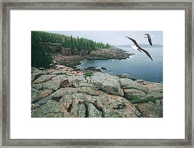 Framed Print featuring the drawing Gulls At Monument Cove by Brent Ander