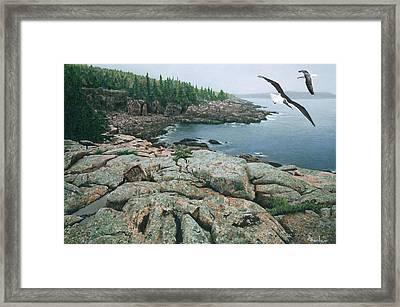 Gulls At Monument Cove Framed Print