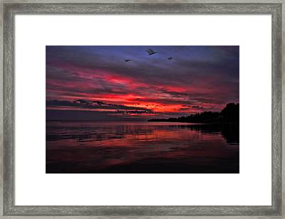 Gulls At Sunrise Framed Print