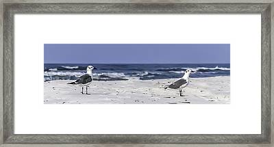 Gulls By The Sea Framed Print by CarolLMiller Photography