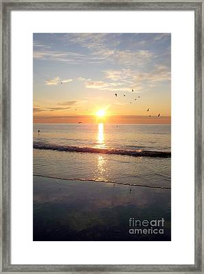 Framed Print featuring the photograph Gulls Dance In The Warmth Of The New Day by Eunice Miller