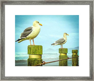 Gulls Framed Print by Denise Darby