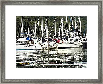 Framed Print featuring the photograph Gull's Dream by Sadie Reneau