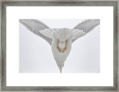 Gulls Flight Framed Print