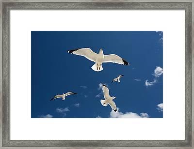 Gulls Flying Against Blue Sky Framed Print by Jim West