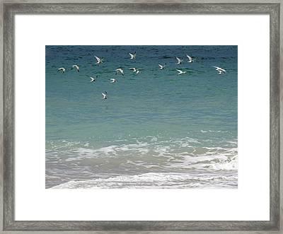 Gulls Flying Over The Ocean Framed Print by Zina Stromberg