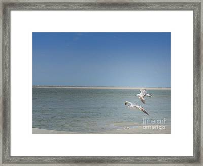 Framed Print featuring the photograph Gulls In Flight by Erika Weber