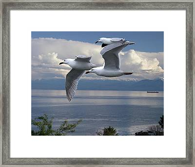 Gulls In Flight Framed Print by George Cousins