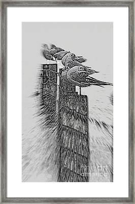 Gulls In Pencil Effect Framed Print by Linsey Williams