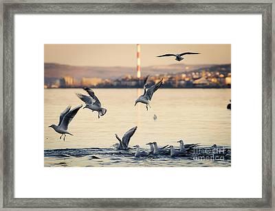 Gulls Framed Print by Jelena Jovanovic