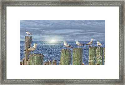 Gulls On The Pier Framed Print