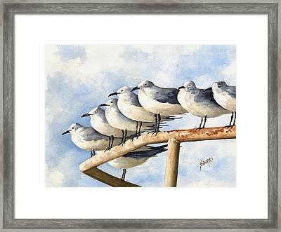 Gulls Framed Print by Sam Sidders