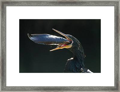 Gulp Framed Print by Doug McPherson