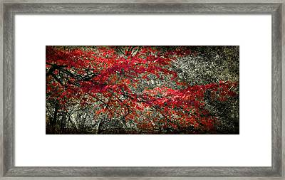 Gum Fall Framed Print by Lana Trussell