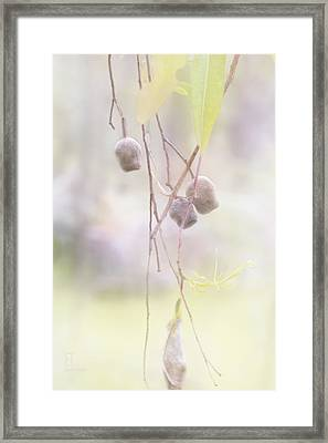 Framed Print featuring the photograph Gum Nuts by Elaine Teague