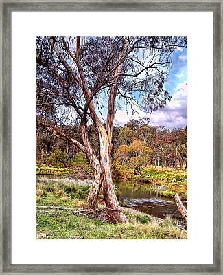 Gum Tree By The River Framed Print by Wallaroo Images
