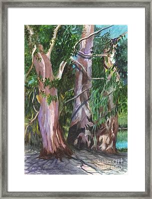 Gum Trees In Oz Framed Print by Carol Wisniewski