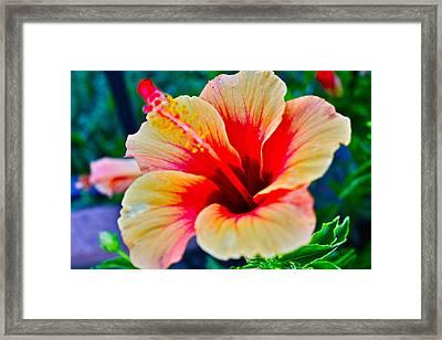 Gumamela1 Framed Print