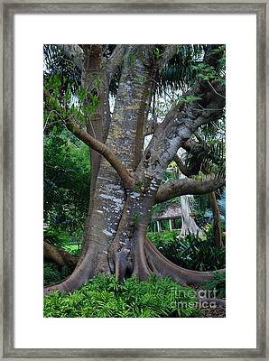 Gumby Tree Framed Print