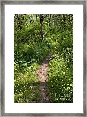 Gunpowder Falls Trail Framed Print by Chris Scroggins