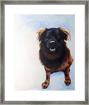 Gus Framed Print by Kevin Hill