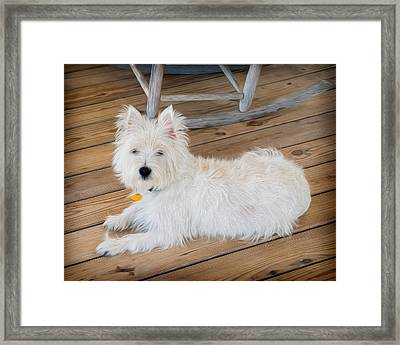 Gus No1 Framed Print