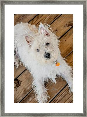 Gus No2 Framed Print